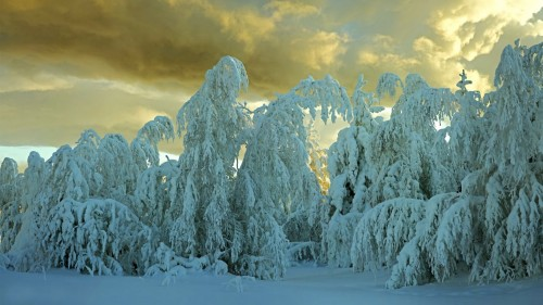 Cold Winter Background
