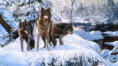 Great Wolves in the Winter