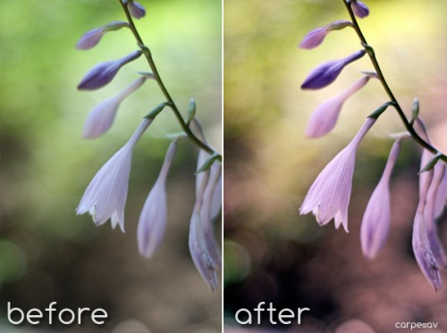Spring Fever-Photoshop Action for Free